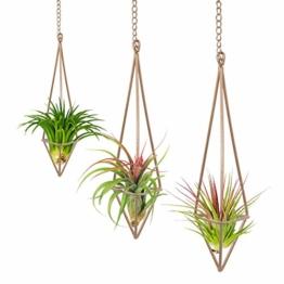 3PCS Rustikaler Stil zum Aufhängen Dreieck Pyramide Form Metall Air Pflanzen Rack Halter mit Ketten für Tillandsien airplants Display - 1