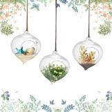 3pcs Hängepflanzen im Glas Hängen Ampel Glasvase Borosilikatglas Terrarium Pflanzen Blumenvase Blumentopf Sukkulente Container 9,3 * 12 cm / 3,7 * 4,7inch - 1