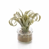 artplants.de Künstliche Tillandsia Cites RAJA im Glas, grau - grün, 16cm - Kunstpflanze - 1