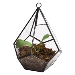 Asvert Geometrische dekorative Terrarium Cube geneigte Klarglas Pflanzer Tischplatte schwarz kleine Air Plant Halter Display Box saftige Moos Blumentopf Container (style7) - 1