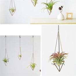 Sundlight Pflanzen-Halter Himmeli, für Tillandsia-Pflanzen (mit Ketten), 2er-Pack, M: 25*7.5cm - 1