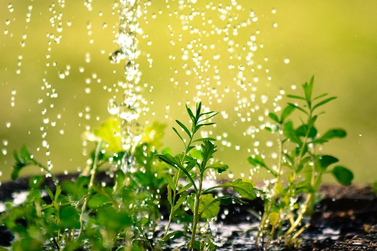 Tillandsien nicht mit Wasser gießen