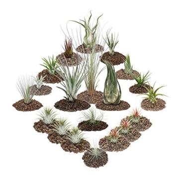 1 Set mit 20 Pflanzen inclusive 3 XXL-Pflanzen - 1