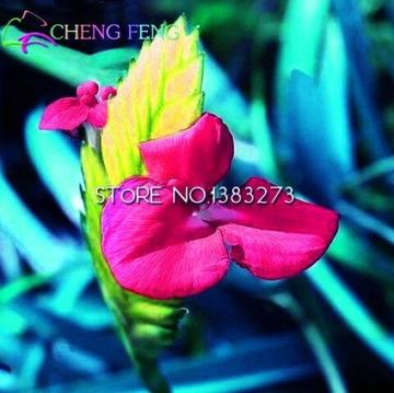 50HOT SALE Tillandsien Cyanea Samen Getopfte Blumensamen violett Chinesische Rare Bonsai Dekoration für Home & Garden Shown In Desc farblos - 4
