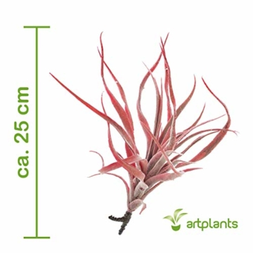 artplants.de Künstliche Tillandsia Stricta Kimmy, rot, 25cm - Kunstpflanze - 2