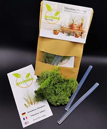 Bastelset, 5 MINI-Tillandsien mit Pflanzenfixierset - 4