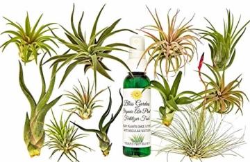 FERRY Bio-Saatgut Nicht nur Pflanzen: 11 Rare Air Tillandsien mit Flasche Bio-Lebensmittel - 1