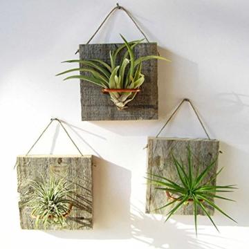 good01 100 Stücke Seltene Tillandsia Pflanzen Samen | Sortierte Lonantha-Luftpflanzen Für Garten-Schönheits-Dekoration - 3