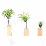 JUN 3PCS Air Halter Halter Container Tischplatte Pflanzgefäß Set in 3Größen, Holz Sockel Air Ständer Vase Topf, für Aufhängen Air, Kleine Tillandsien Mini Kaktus Faux Pflanzen Innen Wand Home Decor - 1