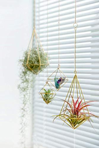 Mkouo 2 Stück Geometrische Air Plants Hängenden Rack Holder métal tillandsien Pflanzen Halter(und Eisenkette) Glod Wandvasen Topf Container Dekoration, 22,9x12,7 cm - 3