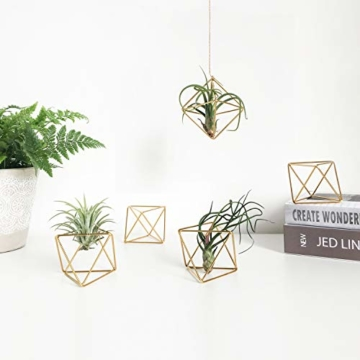 Mkouo 5 Packs Luftpflanzenhalter Modern Geometric Pflanzen Tillandsia Container Metall Luftfarne Display Stand Mini Tablatop Himmeli Decor with Each Side 2.6