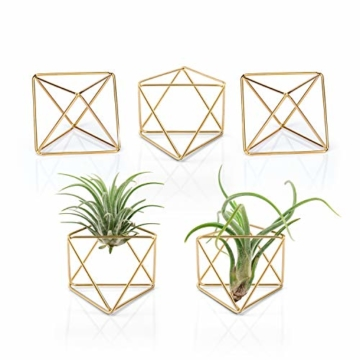 """Mkouo 5 Packs Luftpflanzenhalter Modern Geometric Pflanzen Tillandsia Container Metall Luftfarne Display Stand Mini Tablatop Himmeli Decor with Each Side 2.6"""" Long for Home, Office and Wedding, Gold - 1"""