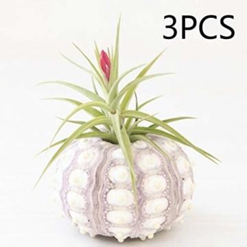 Sweo Samen-Töpfe, Seeigel-Pflanzen, Blumentopf, Tischplatte, Tillandsien-Halter, Miniatur-Gartendekoration - 2