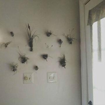 WuWxiuzhzhuo Tillandsia-Samen, seltene Gartendekoration, 100 Stück 1 - 5