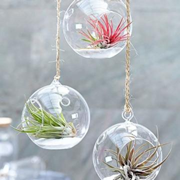 Ecoworld Tillandsien, Luftpflanzen - 20 Stück -2 x 10 Verschiedene Pflanzen Mischen - 6