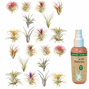 Ecoworld Tillandsien, Luftpflanzen - 20 Stück -2 x 10 Verschiedene Pflanzen Mischen - 7